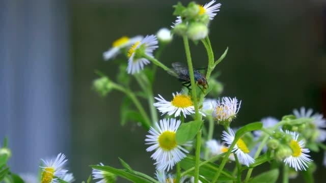 Macro flowers summer video