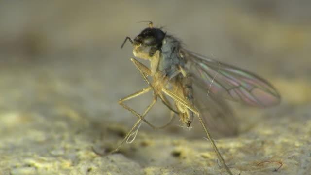 Macro frozen mosquito video