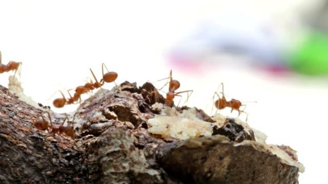 Macro shot of ant activity video