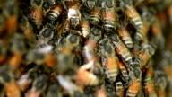 Macro shot of bees video