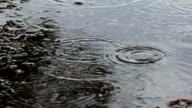 Macro Shot of Raindrops Creating Ripples in a Puddle video