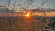 4K Macro Shot of Tall Dry Grass with Sunset in Background, Crane Shot video