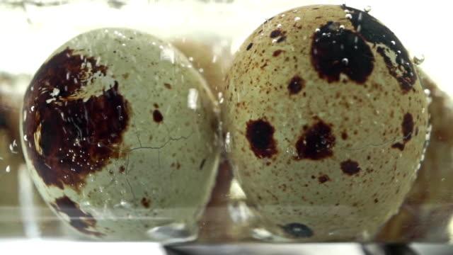 Macro video of boiling quail eggs video