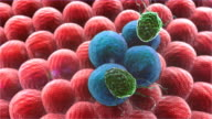 macrophage, cancer cell video