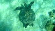 Madagascar underwater sea turtle coral reef fish swim giant clam video