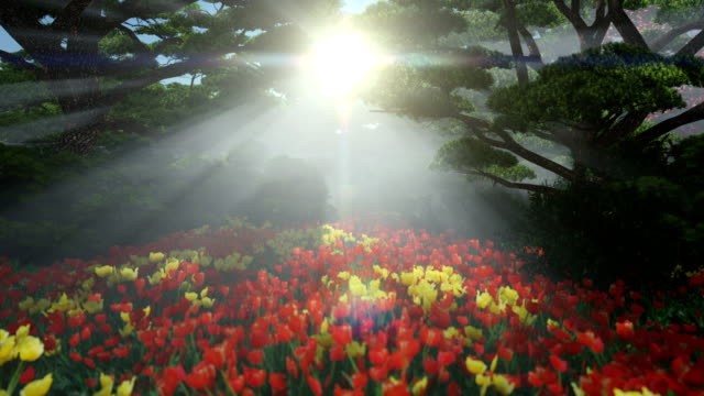 Magic forest with colorful tulips, sun shinning through trees, tilt video
