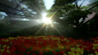 Magic forest with colorful tulips, sun shinning through trees video