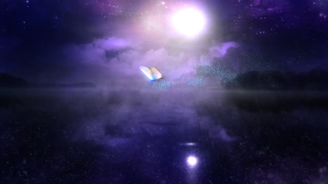Magic Night with Butterfly 100% loop video