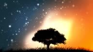 Magic tree video