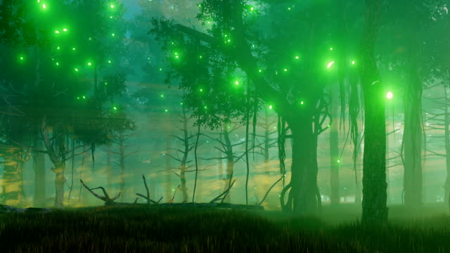 Magical forest at misty night video