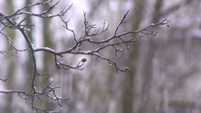 Magical Snow - Snow / Christmas Video video