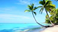 Magnificent tropical beach video