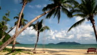 Magnificent view of the sea and palms on the beach video