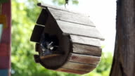 magpie feeding at bird house video