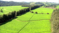 Magwa Tea Plantation  - Aerial View - Eastern Cape,  OR Tambo District Municipality,  Ngquza Hill,  South Africa video