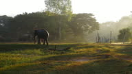 Mahout ride an elephant and take a bath elephant in the river video