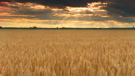 HD TIME LAPSE: Majestic Cloudscape Over The Wheat Field video