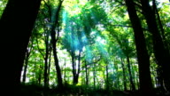 Majestic Forest video