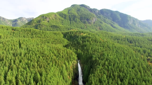 Majestic Waterfalls Deep Within Forested Mountain Landscape video