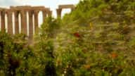 Major tourist attraction in Athens, Olympian Zeus Temple, archaeology excavation video