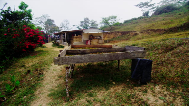 A makeshift table holds pounds of ripe coffee cherries that are drying in the early morning sun. These coffee cherries will eventually be pulped and two coffee bean will come from each cherries. Which in turn will be roasted and ground! video