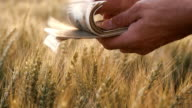 SLO MO Making money in agriculture video