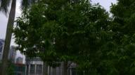 malaysia kuala lumpur evening twin towers down park to top panorama video