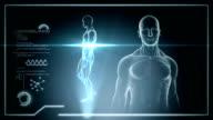 Male anatomy - Human Cardiovascular Scan - Stock video video
