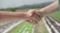 Male and female shaking hands at the lettuce field video