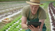 Male farmer working with digital tablet in field of lettuce video