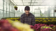 Male florist at greenhouse video