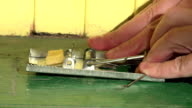 Male hand pluck large piece of cheddar cheese placed as bait in mouse trap. FullHD video