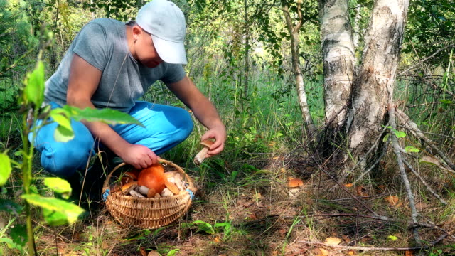 Male mushroom picker picking mushrooms and putting them to full basket video