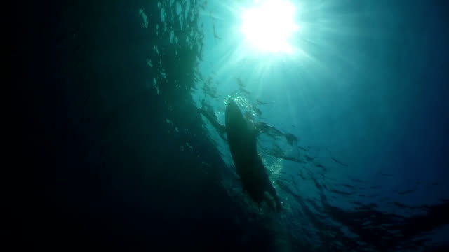 SLOW MOTION UNDERWATER: Male surfer paddling on a surf in open water ocean video