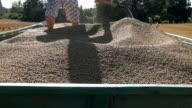 male work on trailer full thresh grain cereal harvest time video