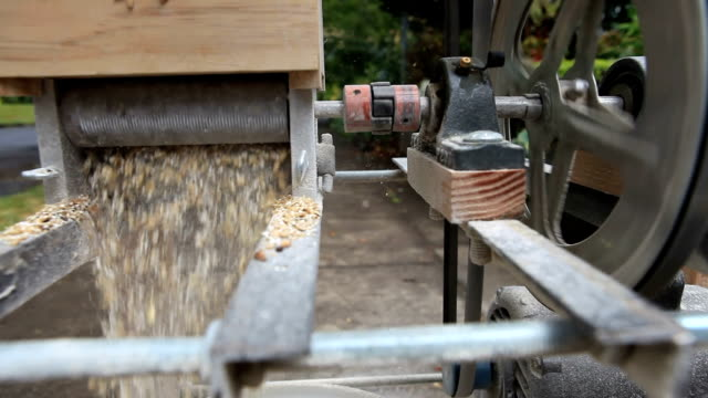 Malted Barley being crushed in a grain mill video