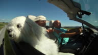 HD SLOW-MOTION: Maltese Dog In A Convertible video