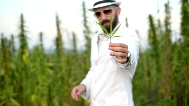 Man and cannabis. video