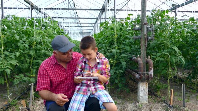 4K Man and child using digital tablet in greenhouse video