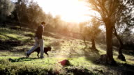 SERIES: Man and dog in olive grove video