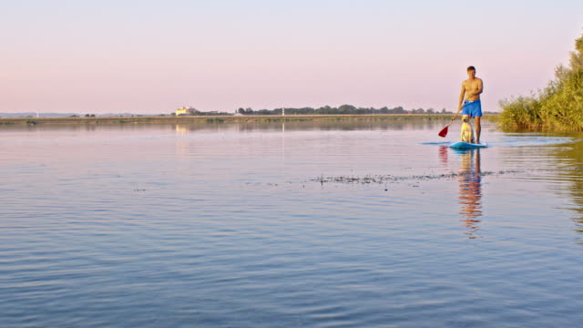 Man and dog paddleboarding on the lake video