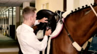 Man binds a saddle to the horse video