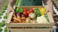 Man carrying wooden crate with vegetables across a field video