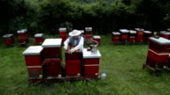 Man checking his hives and bees video