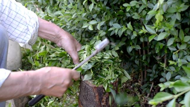 Man Chopping Branches video