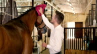 Man clean the horse's withers video