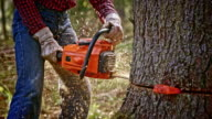 SLO MO Man cutting a wedged tree with chainsaw video