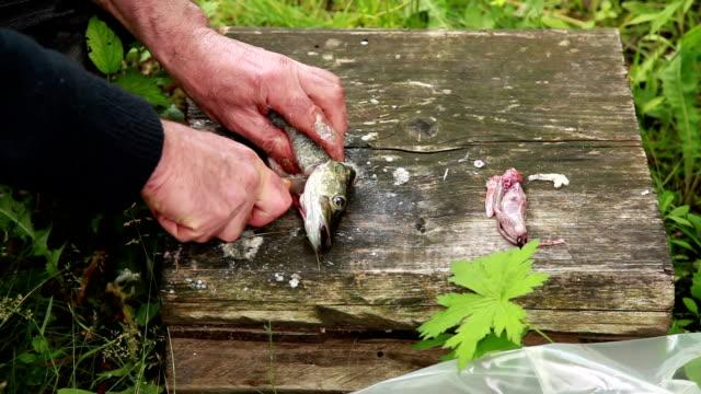 Man cutting off fish head video