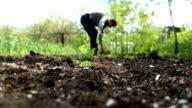 Man digging shovel in the garden video