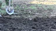 man digging with a shovel bayonet video